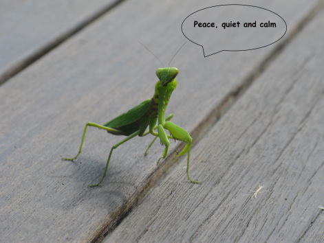 Chilled praying mantis